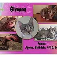 Adopt A Pet :: Givonna - Evans, WV