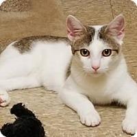 Adopt A Pet :: Pixie - Trenton, NJ