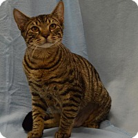 Adopt A Pet :: Yummy Mummy - Alpharetta, GA