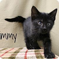 Adopt A Pet :: Kimmy - Melbourne, KY