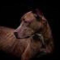 Adopt A Pet :: Piper - Centerburg, OH