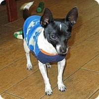 Adopt A Pet :: Ricki - San Antonio, TX