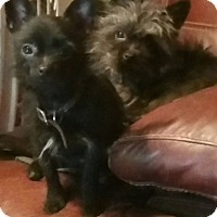 Adopt A Pet :: Jinx - Ortonville, MI