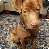 Adopt A Pet :: Yoshi - Nashville, TN
