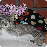 Adopt A Pet :: Mirabelle - Santa Rosa, CA