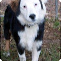Adopt A Pet :: Max - Harrison, AR
