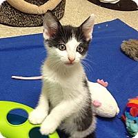 Adopt A Pet :: Bubbles - Island Park, NY