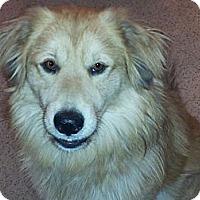 Adopt A Pet :: Tanner - Denver, CO