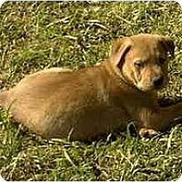 Adopt A Pet :: PUP2 - Sacramento, CA