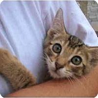 Adopt A Pet :: Tommy - New Egypt, NJ