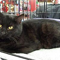 Adopt A Pet :: Maris - Ferndale, MI
