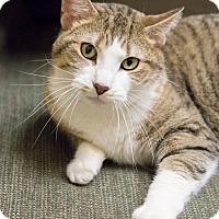 Adopt A Pet :: Longfellow - Chicago, IL