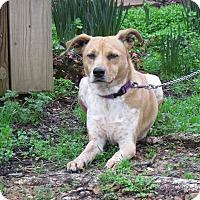 Adopt A Pet :: DIXIE - Hartford, CT