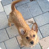 Adopt A Pet :: Ernie - Fullerton, CA