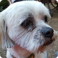 Adopt A Pet :: Banksy - Memphis, TN