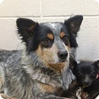 Adopt A Pet :: Willie - Las Vegas, NV