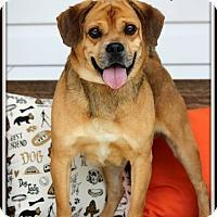 Adopt A Pet :: Ralphie - Dixon, KY