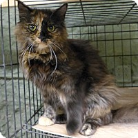Adopt A Pet :: Carmen - Marlinton, WV