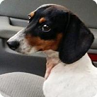 Adopt A Pet :: Rhett Rawlings - Houston, TX