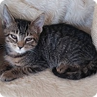 Adopt A Pet :: Micah - Middletown, NY