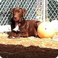Adopt A Pet :: Nike - Huntsville, AL