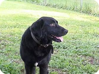 Petsmart Parma Adoptable Dogs