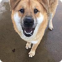 Adopt A Pet :: Fluffy - Chula Vista, CA