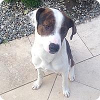 Adopt A Pet :: Ripley - Los Angeles, CA