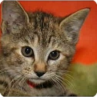 Adopt A Pet :: JENNIFER - SILVER SPRING, MD
