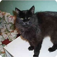 Adopt A Pet :: Smokie - Hamburg, NY