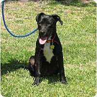 Adopt A Pet :: Sami - Kingwood, TX