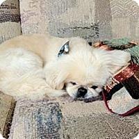 Adopt A Pet :: Xavier - Southampton, PA