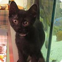 Adopt A Pet :: Woody - Raritan, NJ