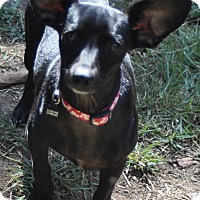 Adopt A Pet :: Diego - Santa Monica, CA