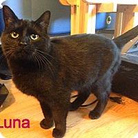 Adopt A Pet :: Luna - Williamston, MI
