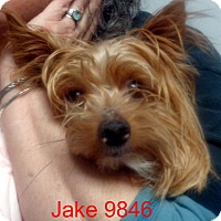 Adopt A Pet :: Jake - baltimore, MD