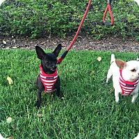 Adopt A Pet :: Alvin - Santa Ana, CA
