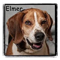Adopt A Pet :: Elmer - Warren, PA