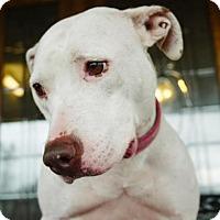 Adopt A Pet :: Lila - Sponsored dog - Howell, MI