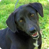 Adopt A Pet :: Scottie- Wonderful Dog! Lower Fee! - Locust Fork, AL