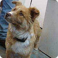 Adopt A Pet :: Rookie - Aurora, IL