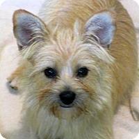 Adopt A Pet :: Chyna - Brunswick, ME