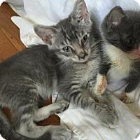 Adopt A Pet :: Jeremy - New York, NY