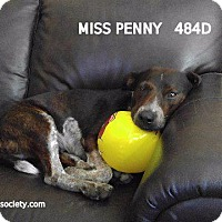 Adopt A Pet :: Miss Penny - Spring, TX
