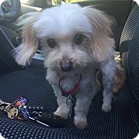 Adopt A Pet :: Clarence (rbf) - Plainfield, CT
