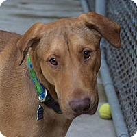 Adopt A Pet :: Jackson - Pontiac, MI
