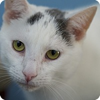 Adopt A Pet :: Chip - LaGrange, KY