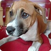 Adopt A Pet :: Cooper - Tampa, FL