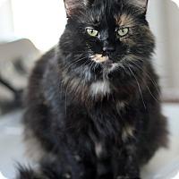 Adopt A Pet :: Riley - Dalton, GA