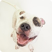 Adopt A Pet :: Sir Petey - Phoenix, AZ
